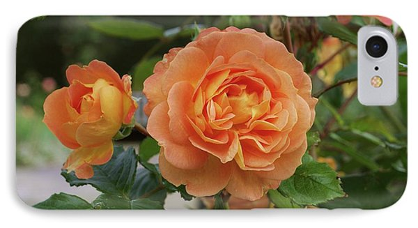 Rose Bowled Over (rosa 'tandolgnil') IPhone Case