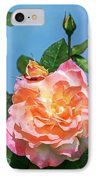 Rose (rosa 'arc De Triomphe') IPhone Case