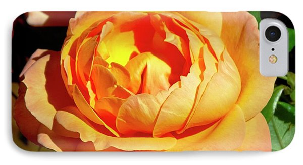 Rose (rosa 'lady Marmalade ') Flower IPhone Case