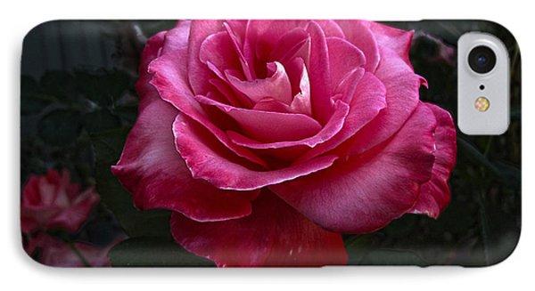 Rose Rose IPhone Case