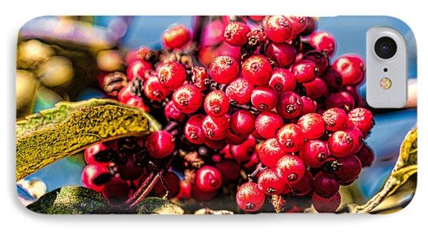 Rowan Berries IPhone Case