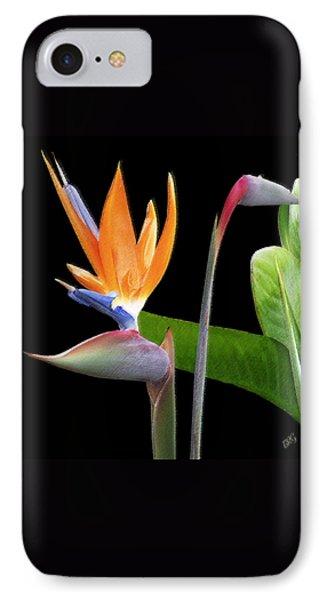 Royal Beauty II - Bird Of Paradise IPhone Case