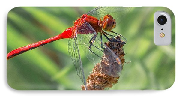 Ruby Meadowhawk Dragonfly IPhone Case
