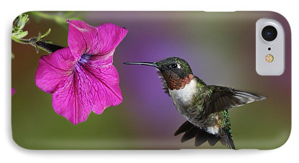 Ruby-throated Hummingbird - D004190 IPhone Case