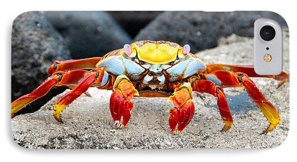 Sally Lightfoot Crab IPhone Case