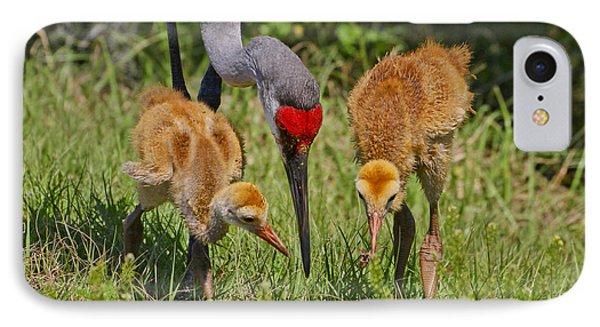 Sandhill Crane Family Feeding IPhone Case