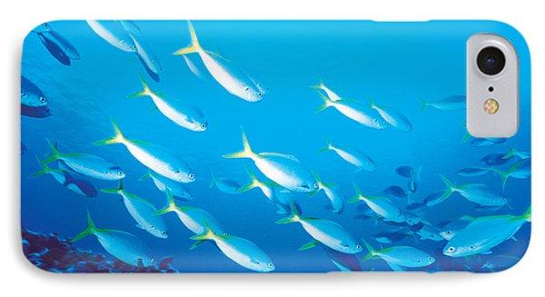 School Of Fish, Underwater IPhone Case