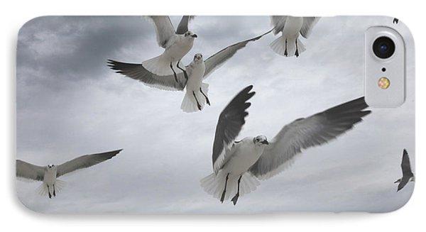 Sea Gull Aggression IPhone Case