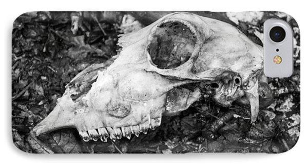 Sheep's Skull IPhone Case