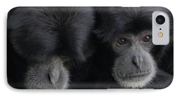 Siamang Pair IPhone Case