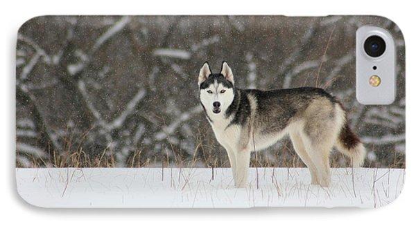 Siberian Husky 20 IPhone Case