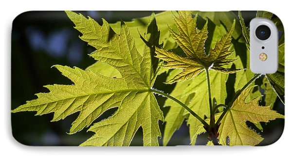 Silver Maple IPhone Case