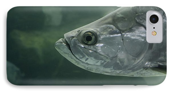 Silver Tarpon IPhone Case