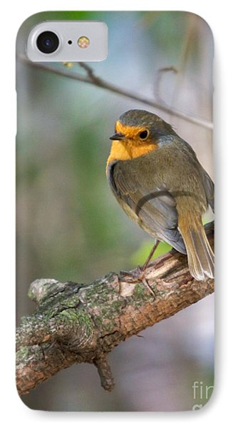 Small Bird Robin IPhone Case