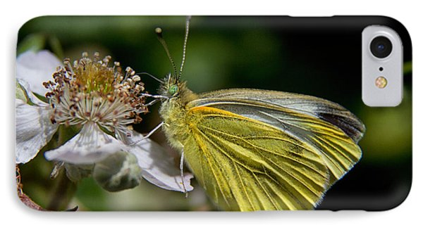 Small White Butterfly IPhone Case