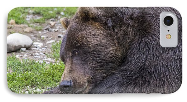 Snoozing Grizzly IPhone Case
