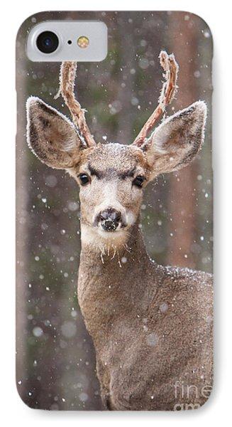 Snow Deer 1 IPhone Case