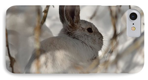 Snowshoe Hare IPhone Case