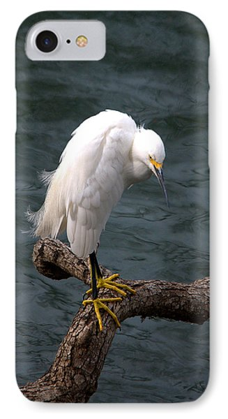 Snowy Egret Out On A Limb IPhone Case