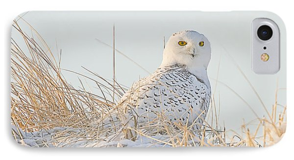 Snowy Owl In The Snow Covered Dunes IPhone Case