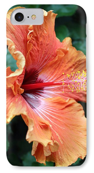 Soft Orange Hubiscus IPhone Case