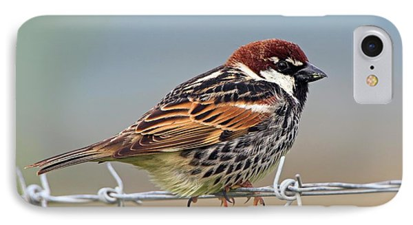 Spanish Sparrow On Barbed Wire IPhone Case
