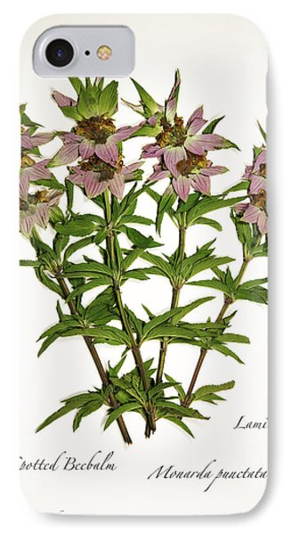 Spotted Beebalm 1 IPhone Case
