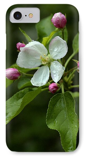 Spring Apple Blossom Encircled By Pink Buds IPhone Case