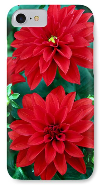 Spring Flowers 5 IPhone Case