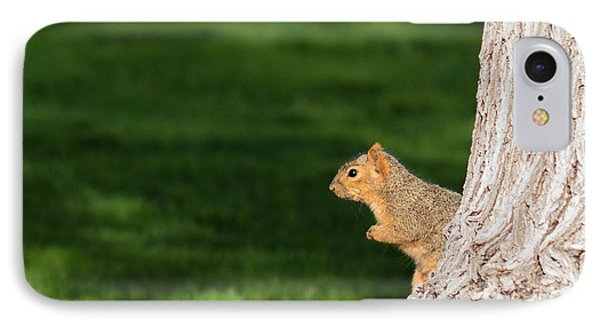 Squirrel And A Tree IPhone Case