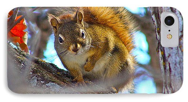 Squirrel Duty. IPhone Case