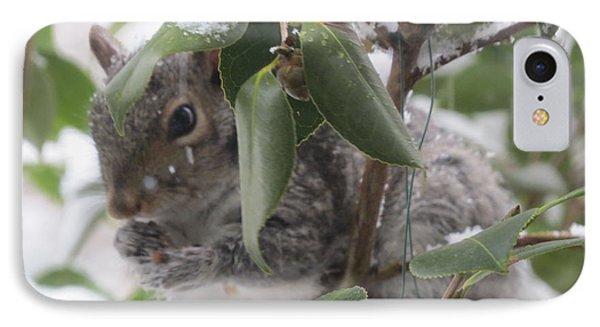 Squirrel In Snow 1 IPhone Case