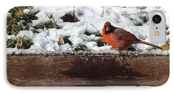 St. Louis Cardinal IPhone Case