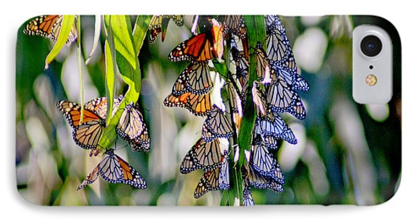 Stained Glass Butterflies IPhone Case