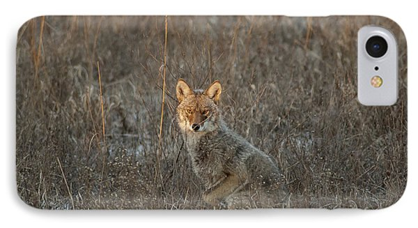 Stalking Coyote IPhone Case