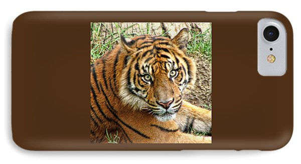Staring Tiger IPhone Case