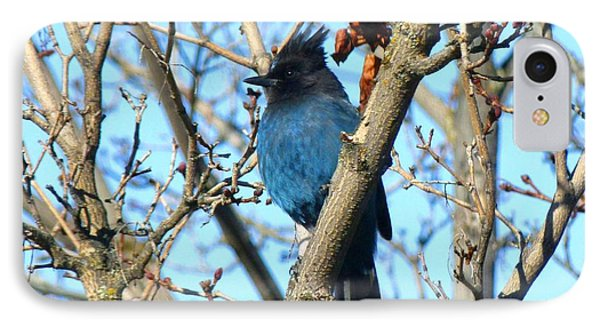 Stellar's Jay In Winter IPhone Case