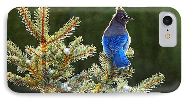 Stellar Jay On Spruce IPhone Case