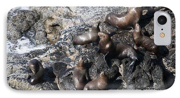 Steller Sea Lion - 0030 IPhone Case