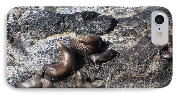 Steller Sea Lion - 0031 IPhone Case