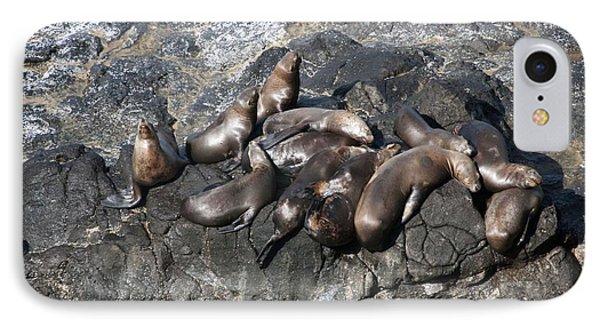 Steller Sea Lion - 0032 IPhone Case