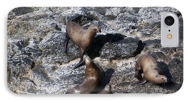 Steller Sea Lion - 0037 IPhone Case