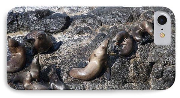 Steller Sea Lion - 0038 IPhone Case