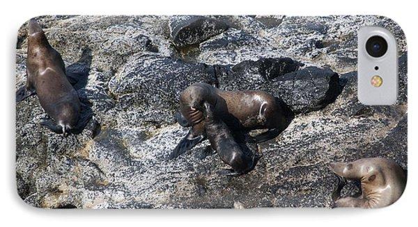 Steller Sea Lion - 0041 IPhone Case