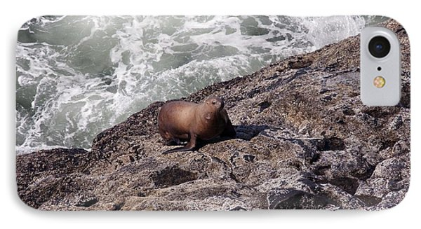 Steller Sea Lion - 0029 IPhone Case