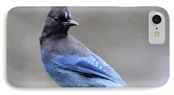 Steller's Jay IPhone Case
