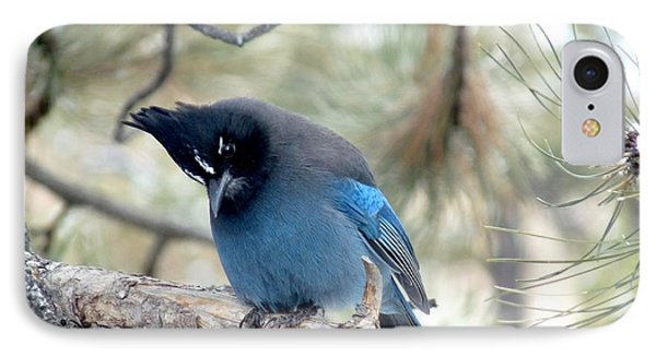 Steller's Jay Looking Down IPhone Case