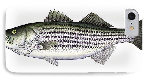Striped Bass IPhone Case