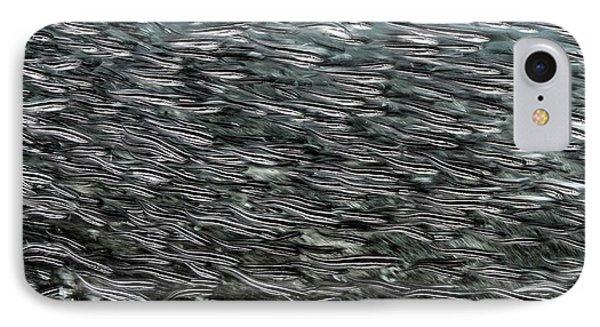Striped Catfish IPhone Case