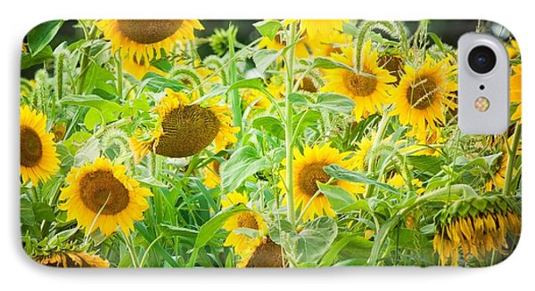 Summer Sunflowers IPhone Case